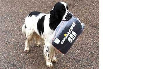 Hundfrågan – hoppande hund