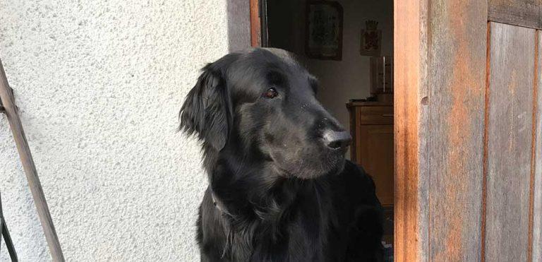 Hundfrågan – lämna hunden ensam