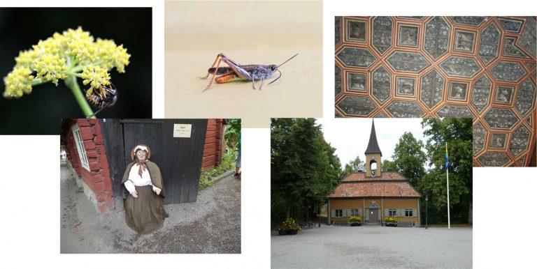 Sommartävlingen: Fem nya bilder