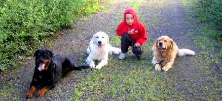 Barn som vill köpa hund i hundfrågan
