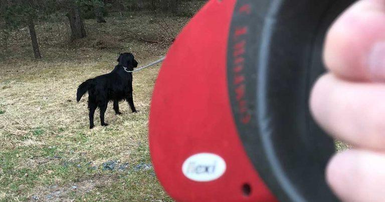 Hundfrågan 50: Nära katastrof