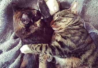 Kattens dag – skicka in din kattbild