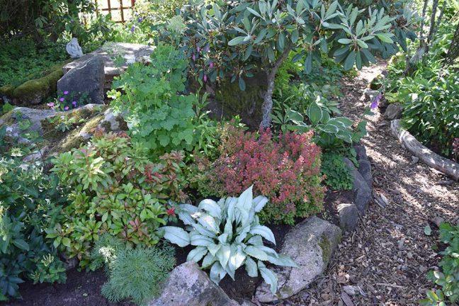 Vi börjar med trädgårdspalten igen