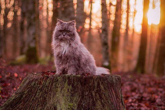 Våra älskade katter firades – Läsarbilder