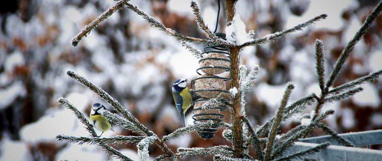 Våra fina vinterfåglar