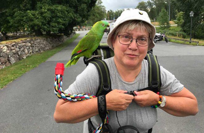Med papegojan på vandring – tv-inslag